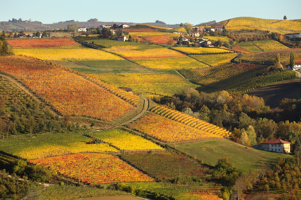 Vineyards in France and Italy: who buys them and for how much? | Photo 1 | ee24