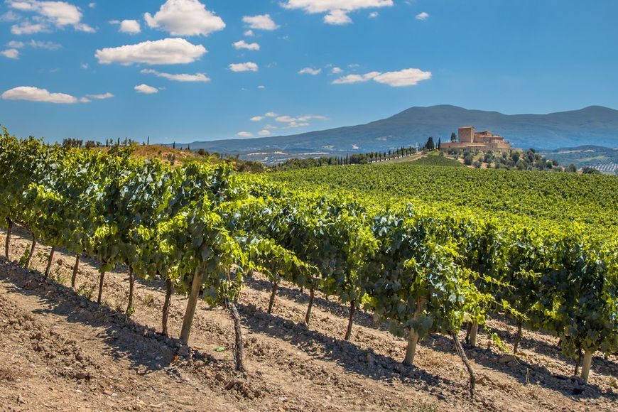 Vineyards in France and Italy: who buys them and for how much?