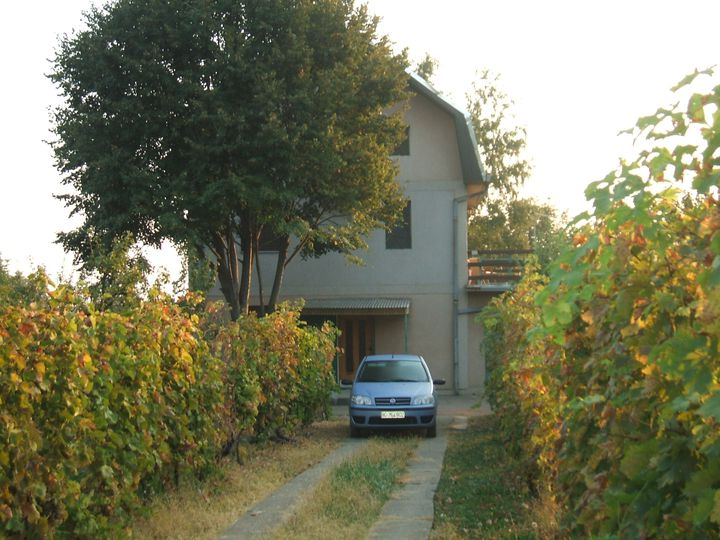 Detached house in city Sremski Karlovci